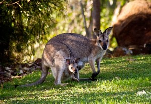 australia gift ideas for mothers